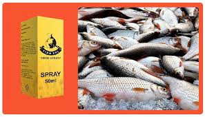 Fish XXL – allegro – cena – ceneo
